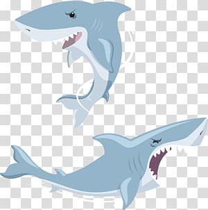 Shark Euclidean , Shark PNG clipart