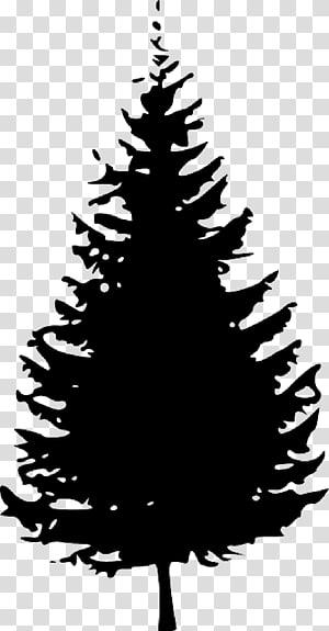 Pine Tree Fir graphics, tree PNG