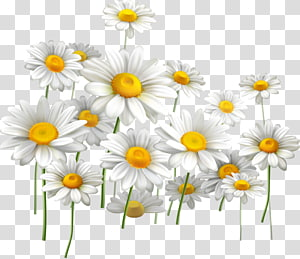 Common daisy Light Flower Chamomile, painted flowers PNG clipart