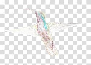 Fauna Hummingbird M Beak Feather, feather PNG