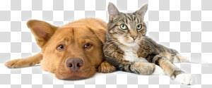 Dog Cat Pet sitting Veterinarian, Dog PNG clipart
