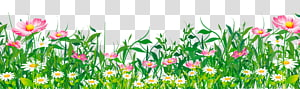 Flower , Grass with Flowers , pink and white flowers border PNG