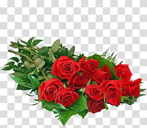 Garden roses Rosety Gardens Cut flowers, rose PNG