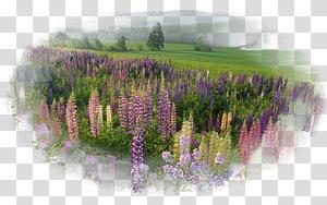 Desktop Nature Natural landscape, others PNG