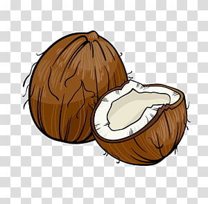 brown coconut shell, Coconut Cartoon Illustration, coconut PNG clipart