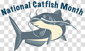 Catfish Drawing , others PNG clipart