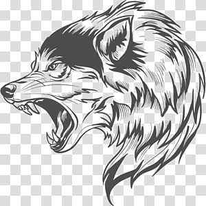 Gray wolf Drawing , others PNG