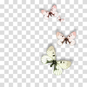 Butterfly Animal Moth Dog, butterfly PNG