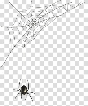 Spider web , spider PNG clipart