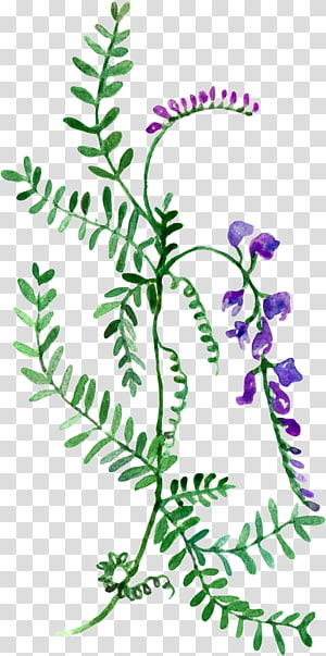 Watercolor painting , Wildflower watercolor map PNG clipart