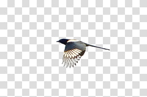 Beak Feather Wing, Asuka PNG clipart