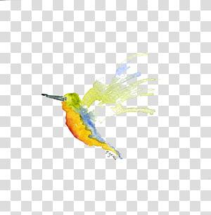 Hummingbird Parrot Beak Feather, Hummingbird PNG