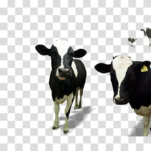 dairy cow PNG clipart