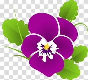 Violet Pansy , violet PNG clipart