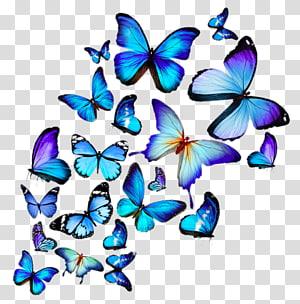 hd butterflies PNG