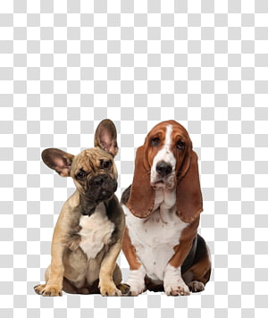 Dog–cat relationship Dog–cat relationship Pet sitting Veterinarian, Dog PNG