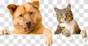 Kindness Animal Hospital Dog Pet sitting Cat, Dog PNG clipart