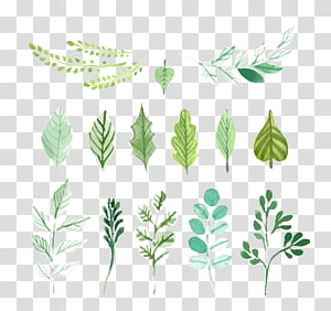 assorted-color leaves illustration, Leaf Green Painting, Leaves PNG clipart
