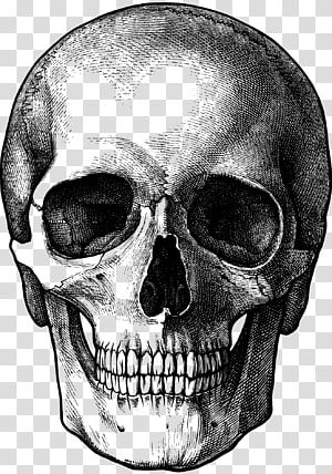 Drawing Skull Art, calavera PNG