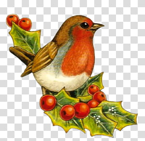 European robin Bird Christmas Drawing , Bird PNG clipart