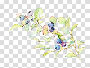 blueberries painting, Watercolor painting Blueberry Illustration, Watercolor Blueberries PNG clipart