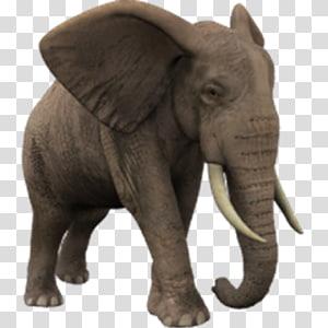 African elephant Elephantidae , others PNG
