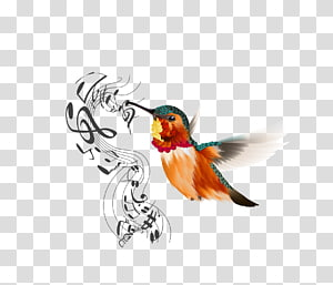 Bird Icon, bird PNG