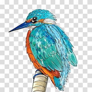 Kingfisher Portable Network Graphics Bird Illustration, Bird PNG clipart