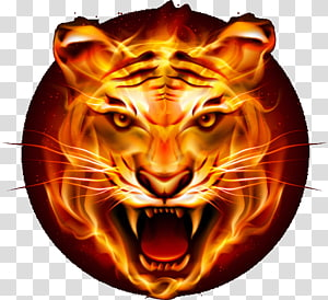 fire tiger illustration, Tiger Felidae Leopard , tiger PNG