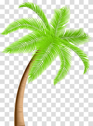 Arecaceae Tree , Palm PNG clipart
