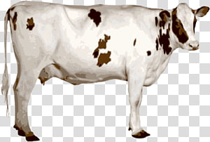 white cow PNG clipart