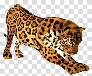 Leopard Felidae Tiger Lion Cheetah, leopard PNG