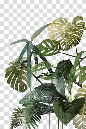 Botanical illustration Drawing Watercolor painting Tropics Illustration, Palm leaf, green leafed plant PNG clipart