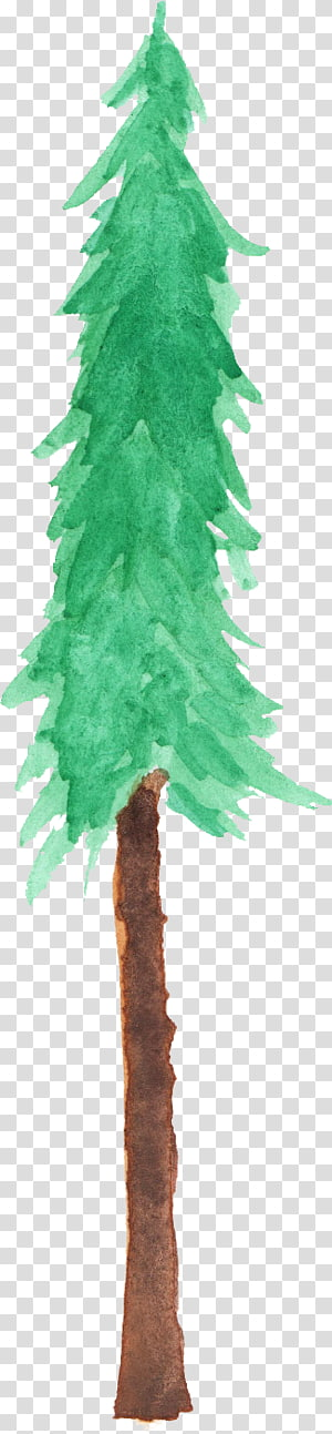 Fir Spruce Christmas tree Branch, christmas tree PNG clipart