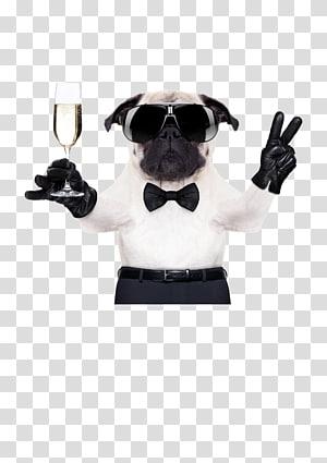 fawn pug , Pug French Bulldog Chihuahua Boxer, Cool Dog FIG. PNG