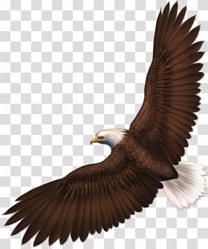 Eagle , Eagle , eagle PNG