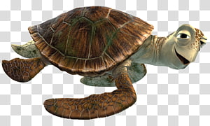 turtle cartoon character illustration, Crush Close Up PNG clipart