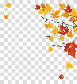 yellow and red leaves , Autumn Maple Leaf PNG