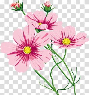 Garden Cosmos Cut flowers 命のいしずえ Chrysanthemum Marguerite daisy, chrysanthemum PNG