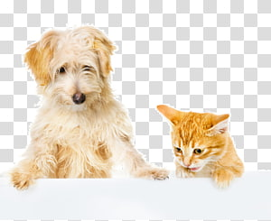 Dog–cat relationship Dog–cat relationship Pet , Dog PNG clipart