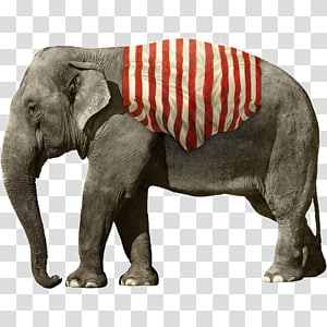 gray elephant illustration, African elephant Circus , Elephant PNG