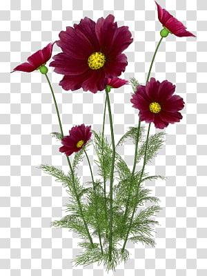plants flowers flowers flowers PNG clipart