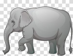 African elephant Elephants Illustration graphics , elephants PNG