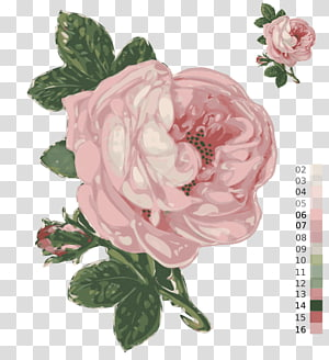Passion for Roses Zazzle Garden roses Flower, rose PNG