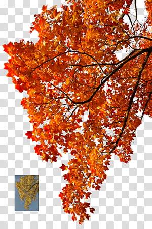 orange leafed trees during daytime, Autumn leaf color Tree, orange tree PNG clipart