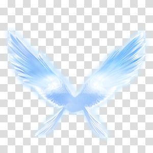 Wing, Angel wings PNG clipart