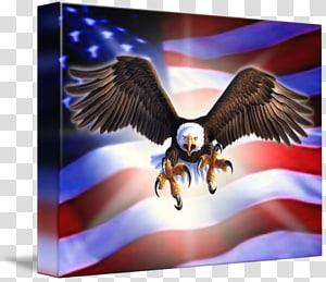 Eagle Gallery wrap Canvas Art, eagle PNG clipart
