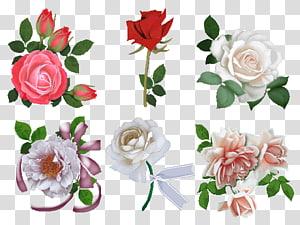 Garden roses Beach rose Cut flowers Floral design, flower PNG clipart