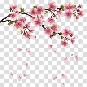 Cherry blossom Flower , cherry blossom PNG