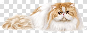 color cartoon pet persian cat PNG
